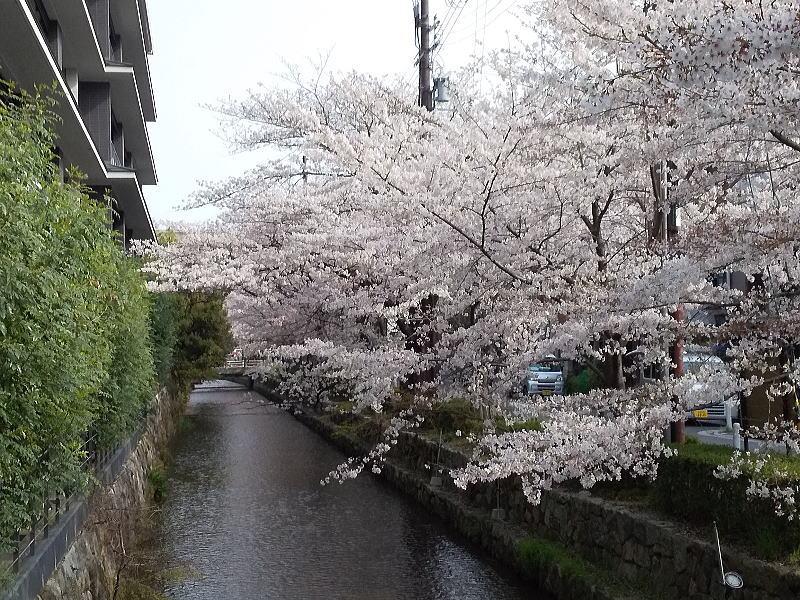 木屋町御池 / 京都ブログガイド