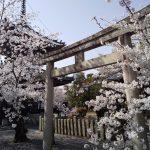 摩利支天と多宝塔 / 京都ブログガイド