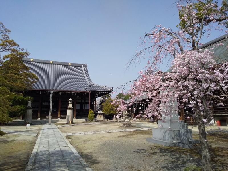 妙顕寺本堂 / 京都ブログガイド