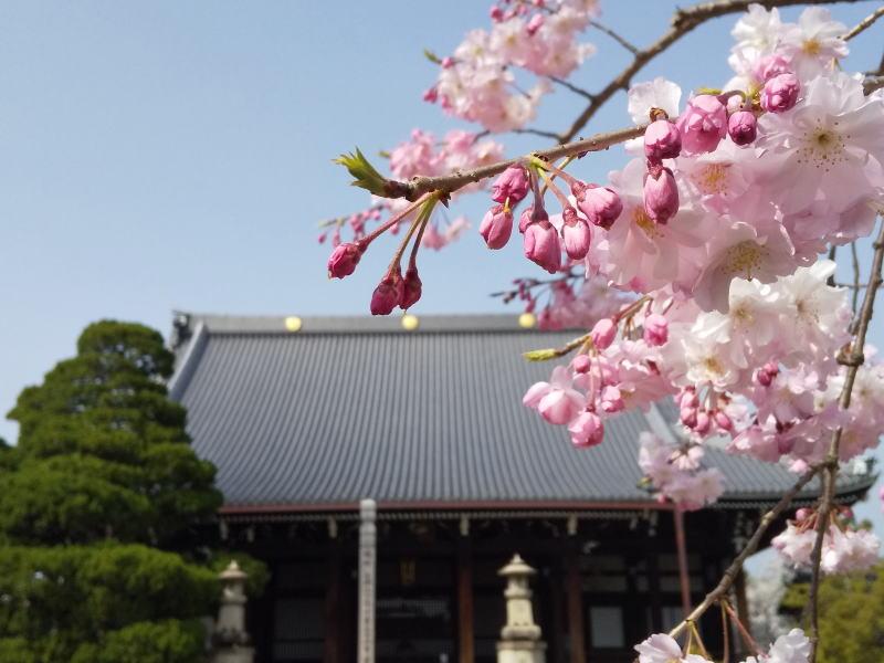 妙顕寺本堂 2021 / 京都ブログガイド