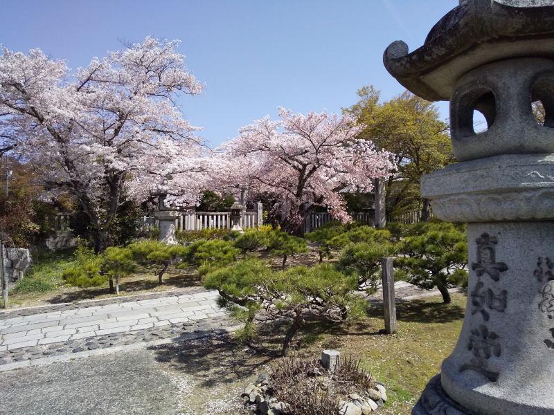 吒枳尼天 ( だきにてん ) 桜 / 京都ブログガイド