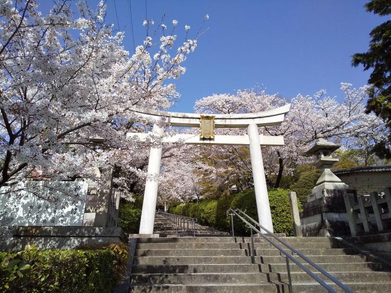 宗忠神社 桜 / 京都ブログガイド