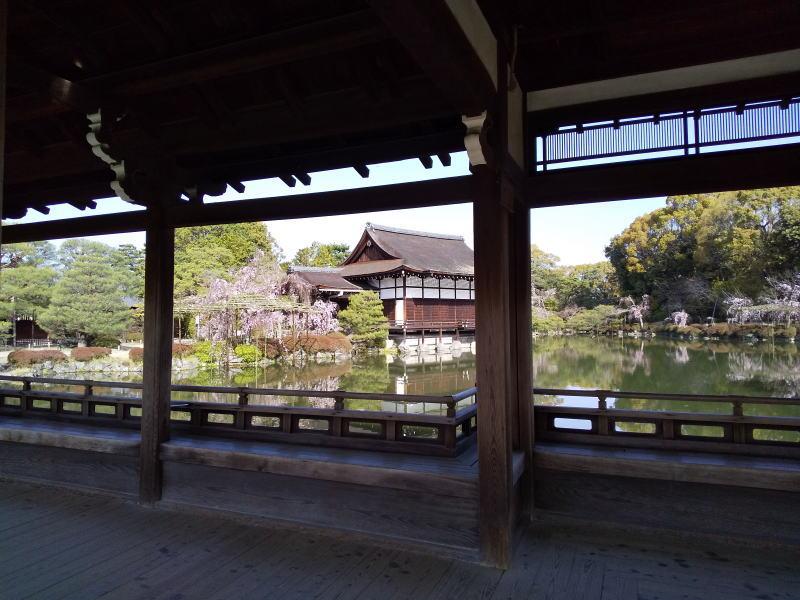 平安神宮 桜 2021 / 京都ブログガイド