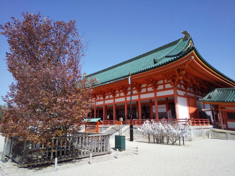 左近の桜 / 京都ブログガイド