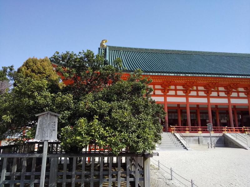 右近の橘 / 京都ブログガイド