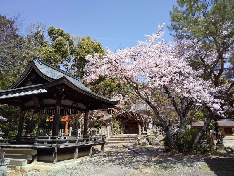 竹中稲荷社境内の桜 / 京都ブログガイド