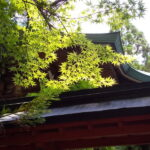 赤山禅院 青紅葉 2021