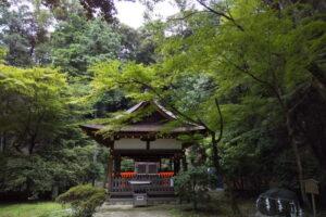 上賀茂神社 青紅葉 2021
