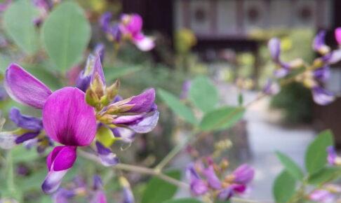 梨木神社 萩 2021 / 京都ブログガイド